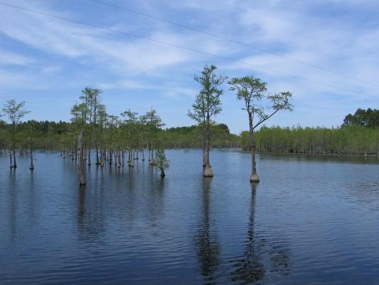 Lake Trees!